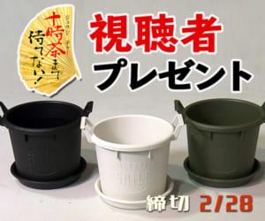 十時茶まで待てない!「プラスチック鉢3種類」プレゼント