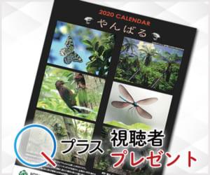 Qプラス「リュウキュウの自然」視聴者プレゼント