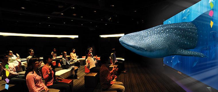"""Sony Aquarium「3Dで観察する沖縄""""美ら海""""の生き物たち」"""