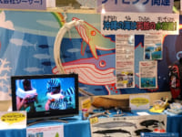 クイズで学べる沖縄の海の秘密!サンゴを救え!めざせ海レンジャー♪