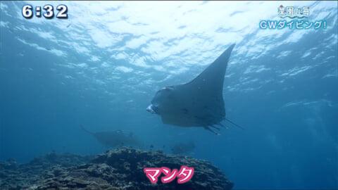 楽園の海 ~GWダイビング!~