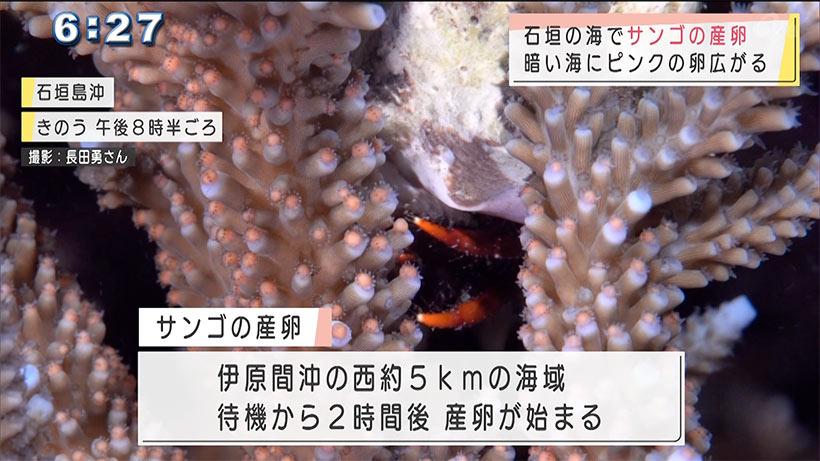 石垣の海で今年初のサンゴの産卵撮影!