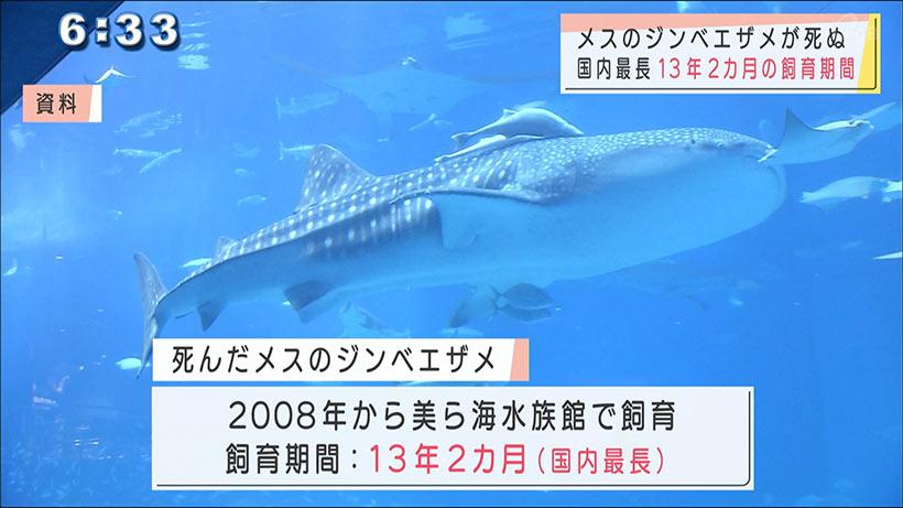 沖縄美ら海水族館 メスのジンベイザメが死ぬ
