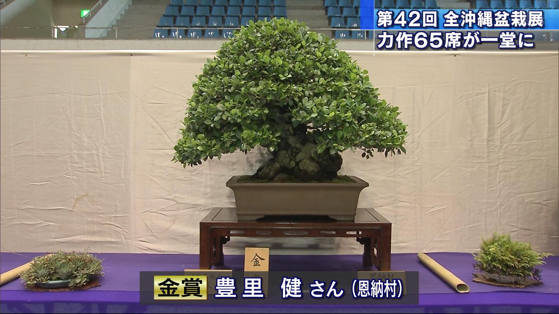 うるま市で「全沖縄盆栽展」