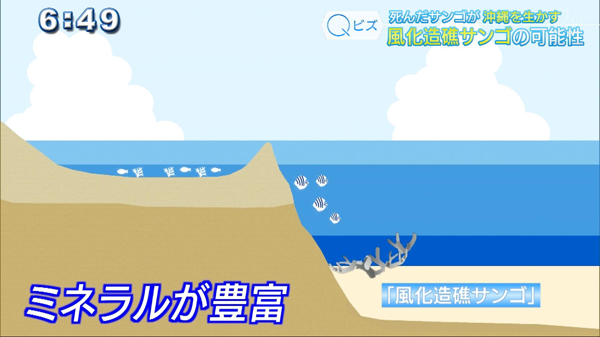 Qビズ 死んだサンゴが沖縄を生かす 風化造礁サンゴの可能性
