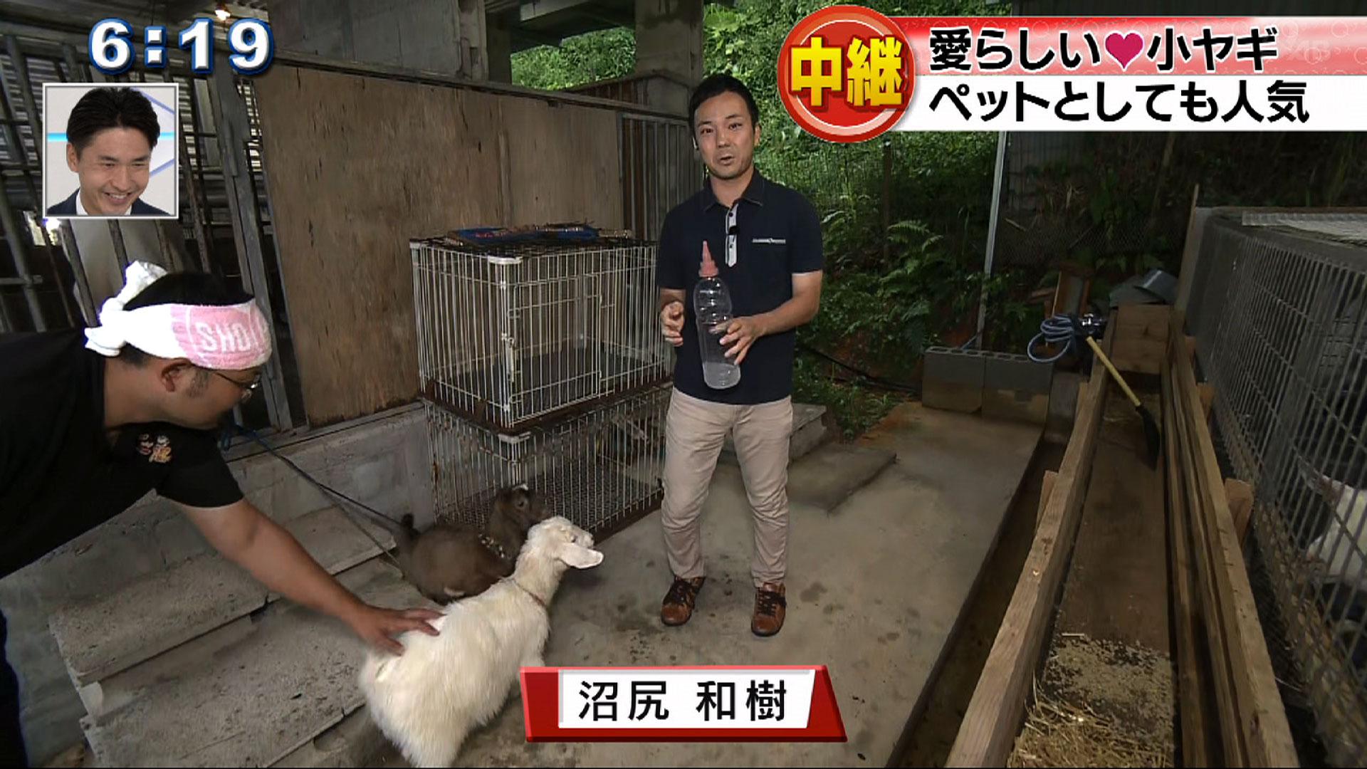中継 うめェ~ ヤギ見つけた!!