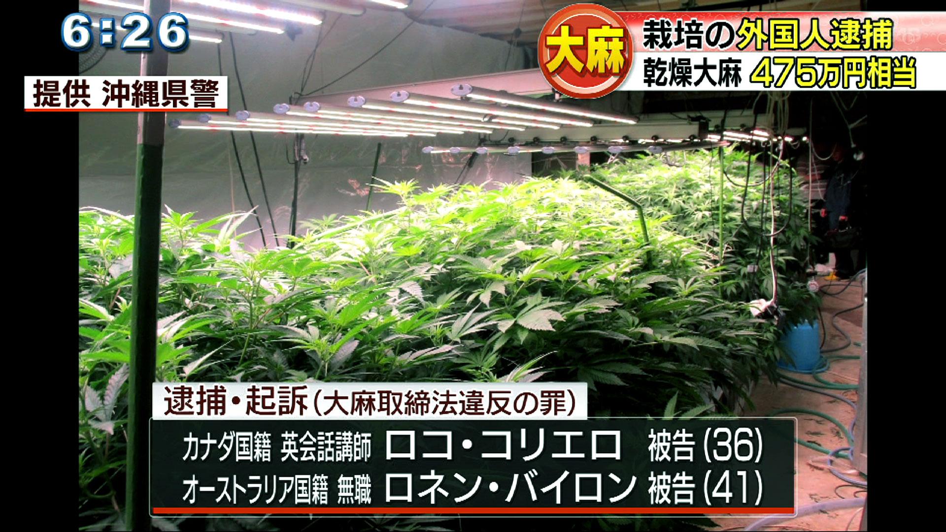 大麻所持・栽培で外国人2人を逮捕・起訴