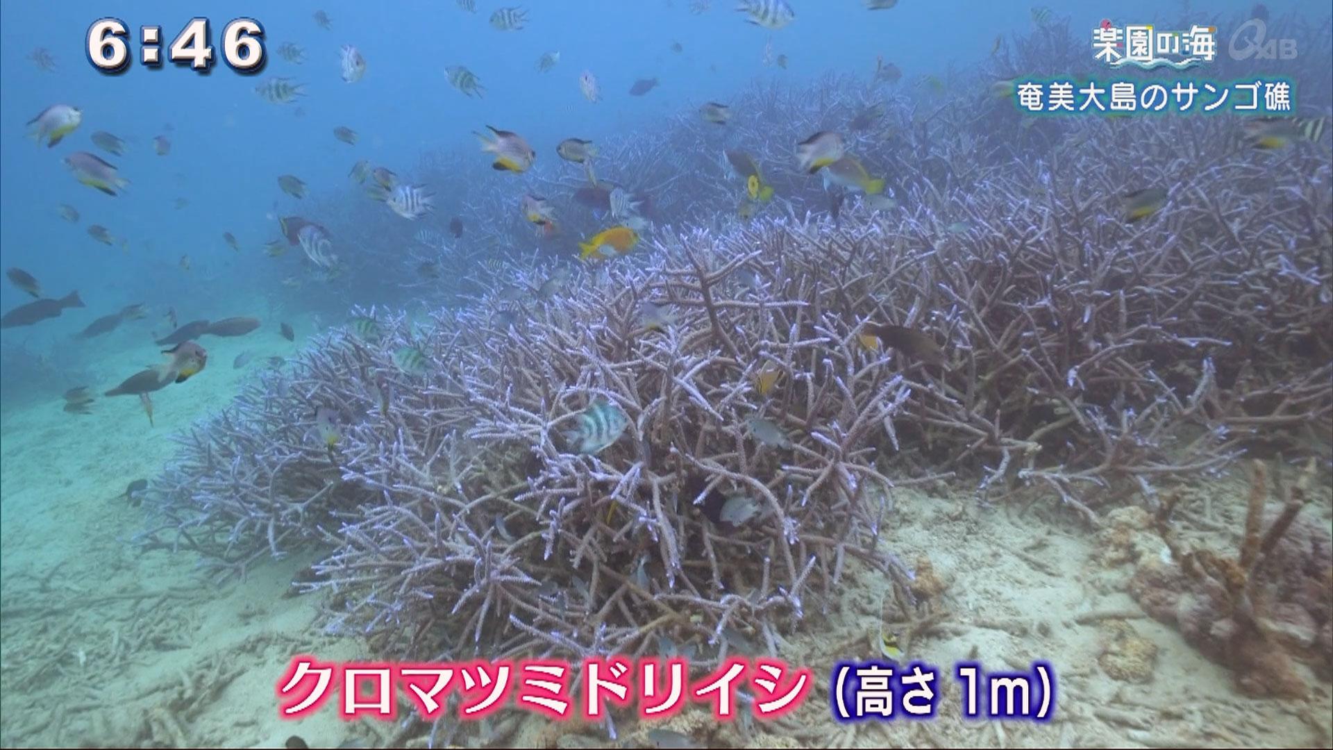 楽園の海 奄美大島のサンゴ礁