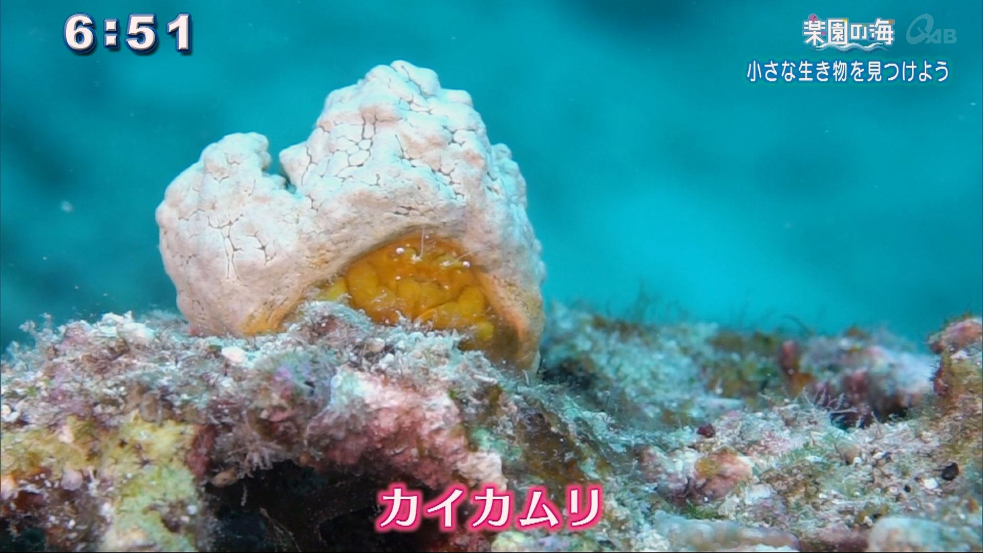 楽園の海 小さな生き物を見つけよう