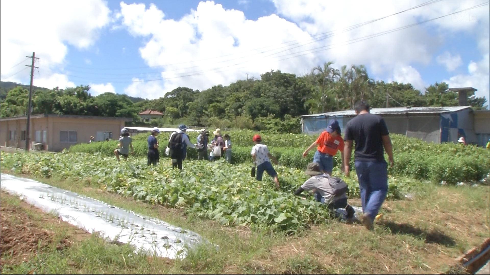 親子で農業体験 夏野菜の収穫に挑戦