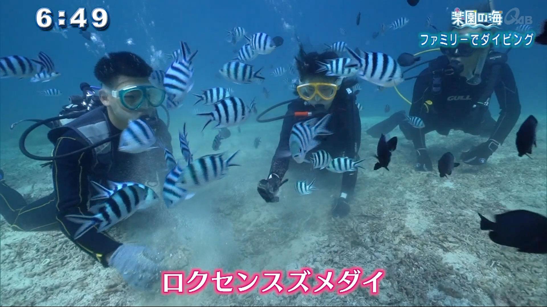 楽園の海 ファミリーでダイビング