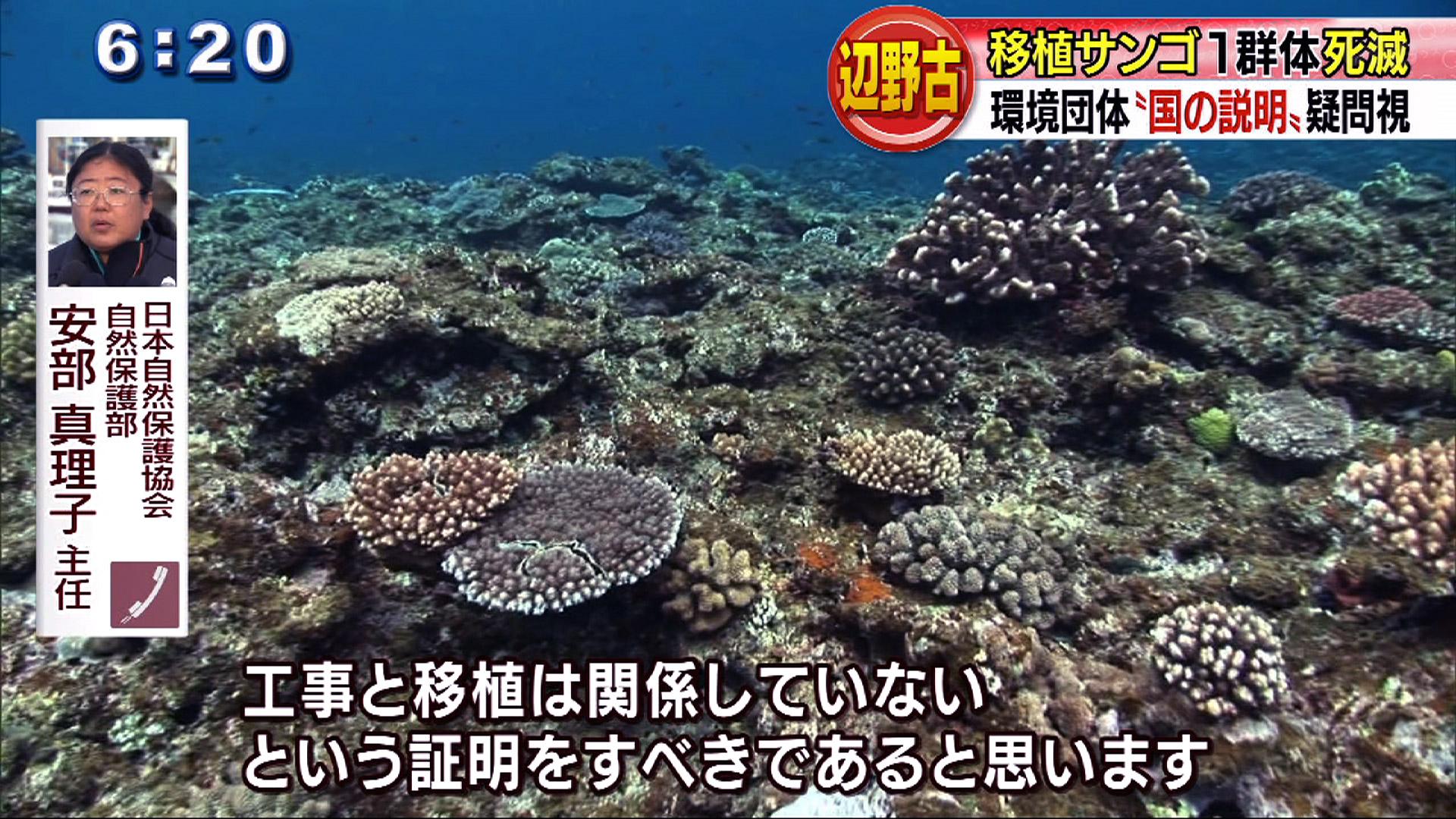 辺野古移植サンゴ1群体死滅で環境団体が疑問視