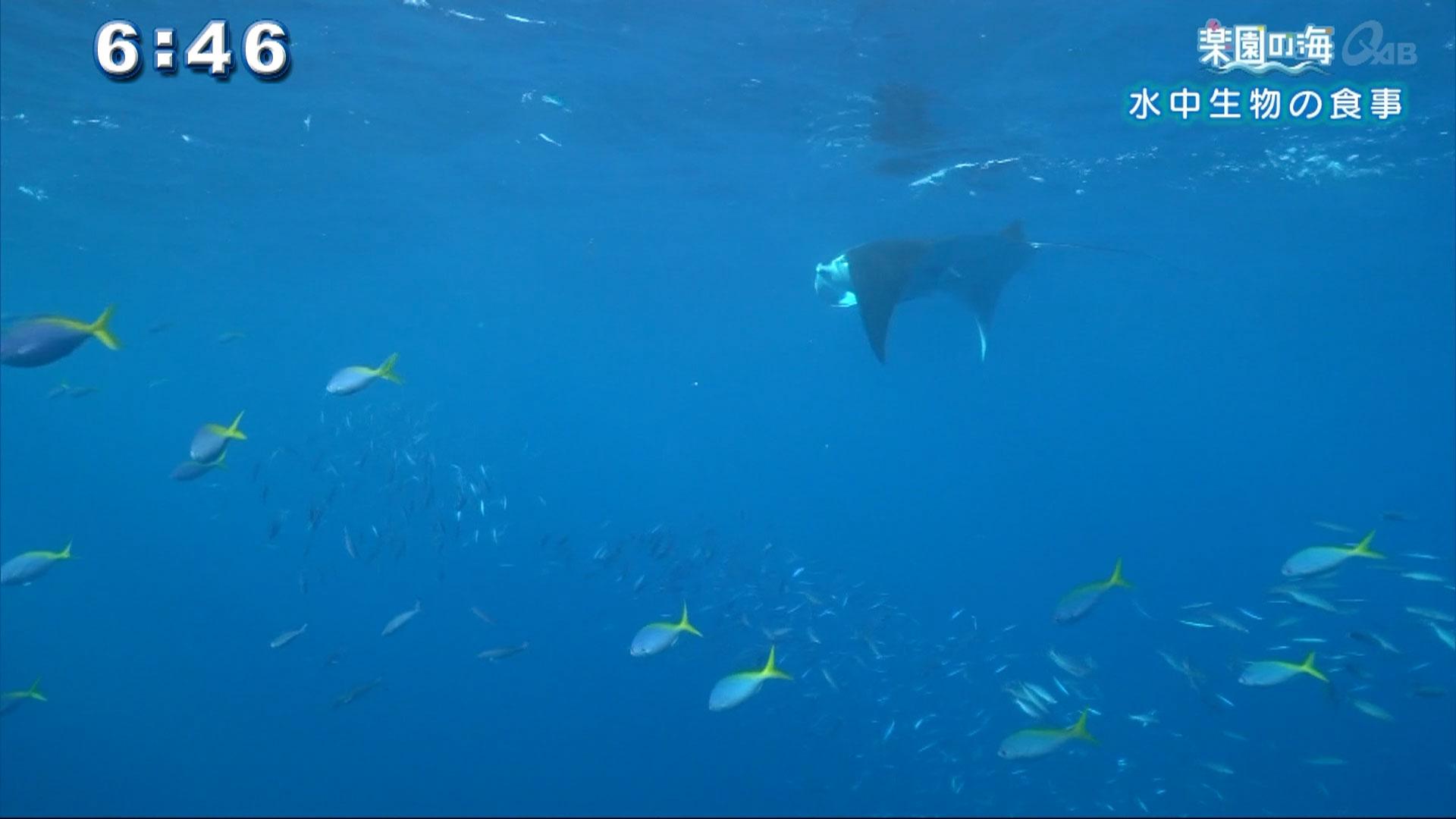 楽園の海 水中生物の食事