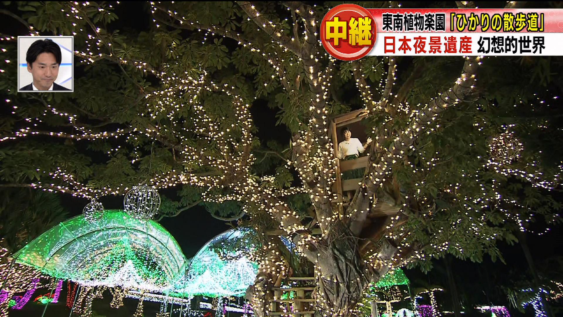 中継 日本夜景遺産 東南植物楽園「ひかりの散歩道」