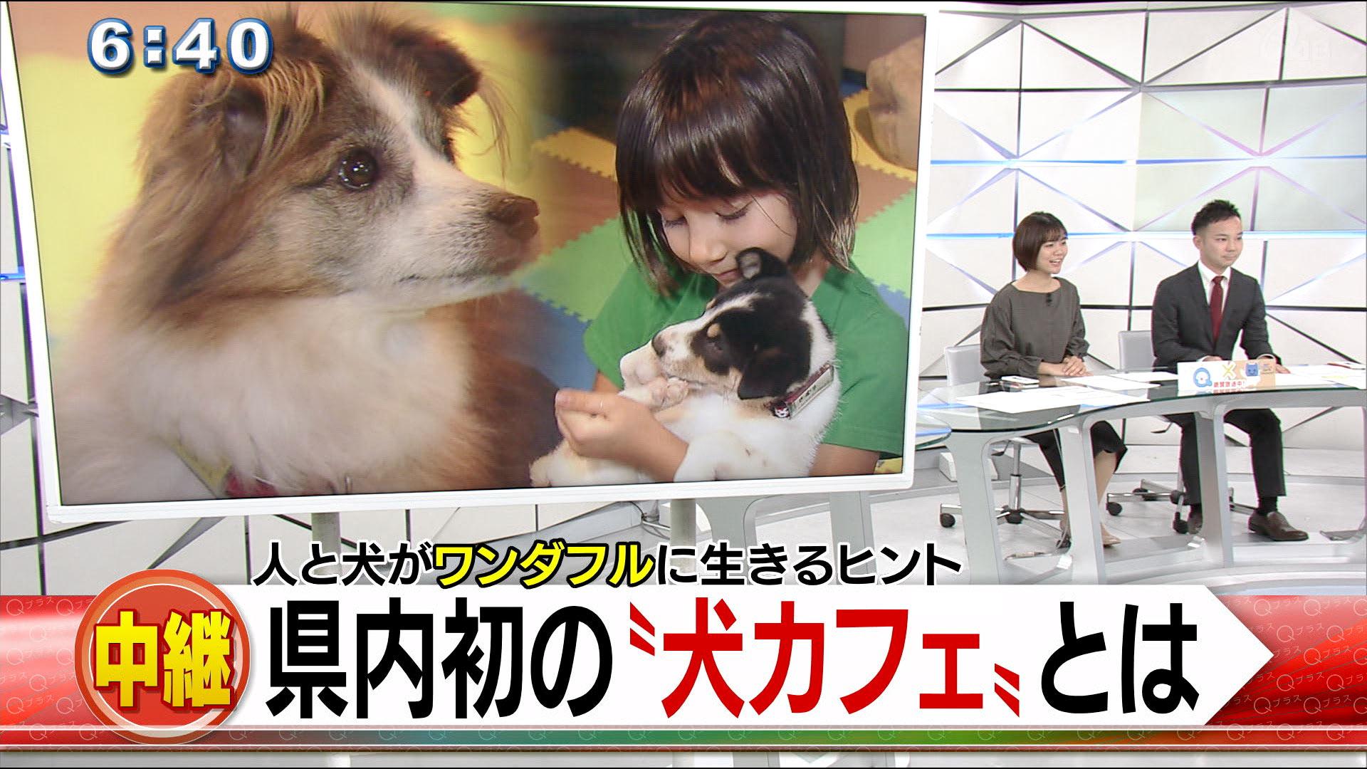 中継 犬かふぇ「ワンダフル」