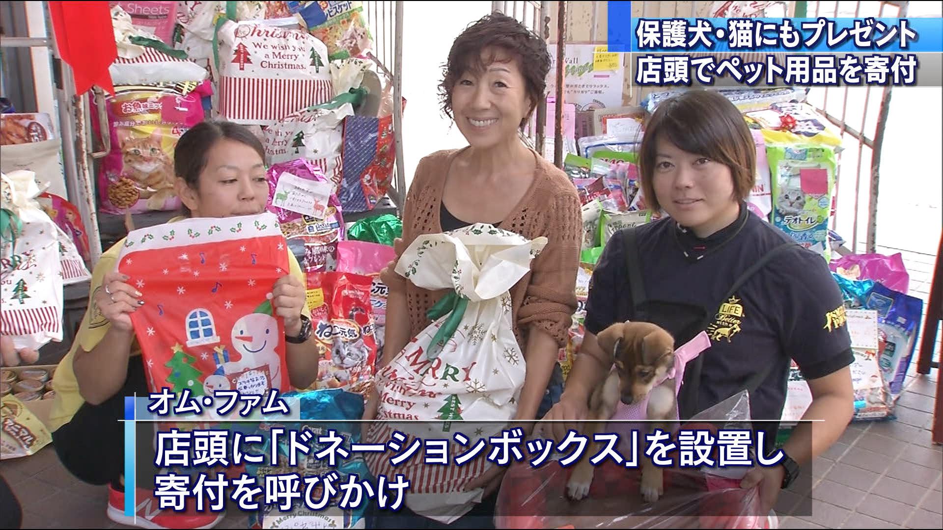 12月25日はクリスマス。子どもたちだけではなく、犬や猫にもプレゼントが贈られました。