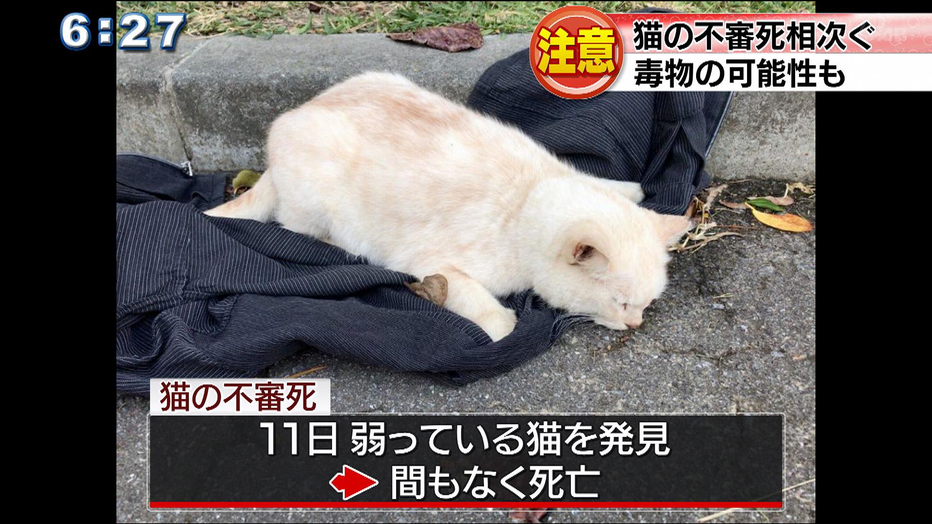猫の不審死相次ぐ 毒物の可能性も