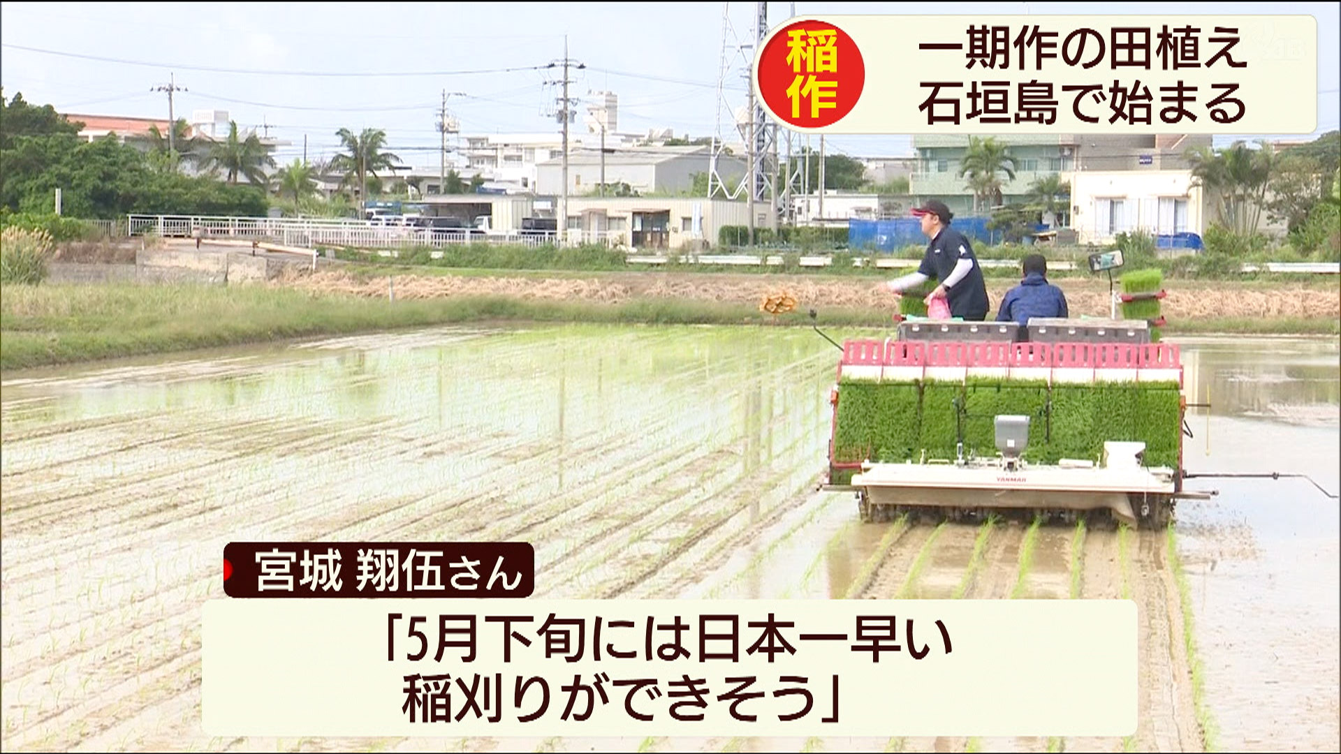 石垣市で一期米の田植え始まる