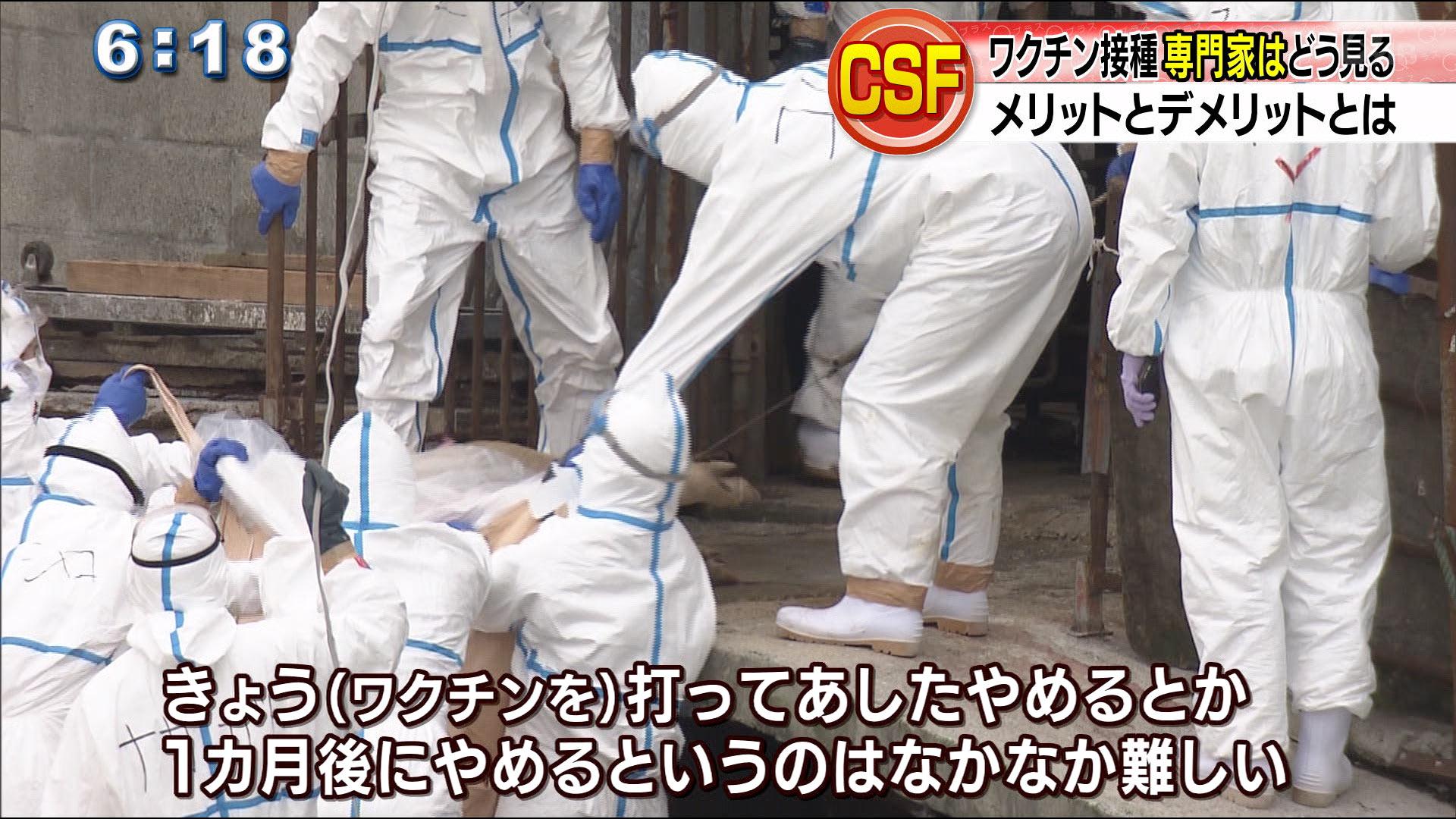 豚コレラのワクチン接種へ 知事が大臣に要請