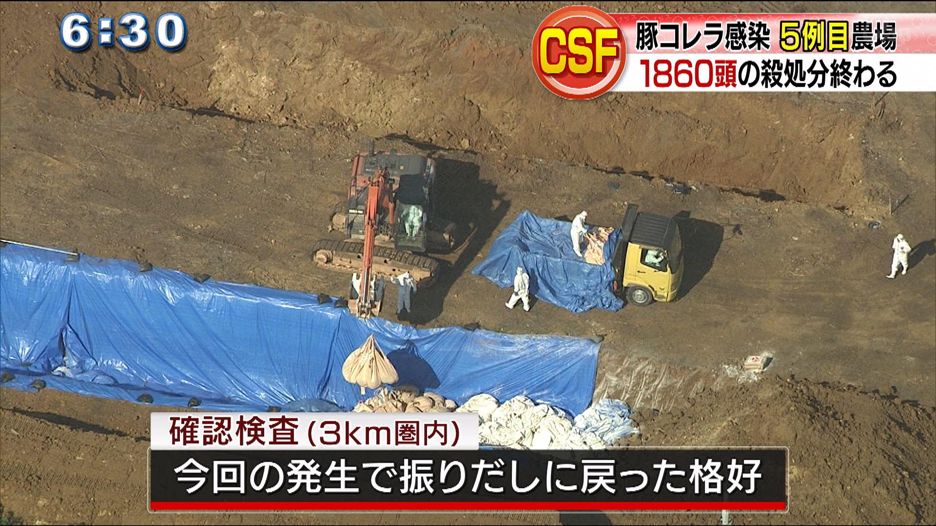 CSF豚コレラ 5例目農場殺処分終わる