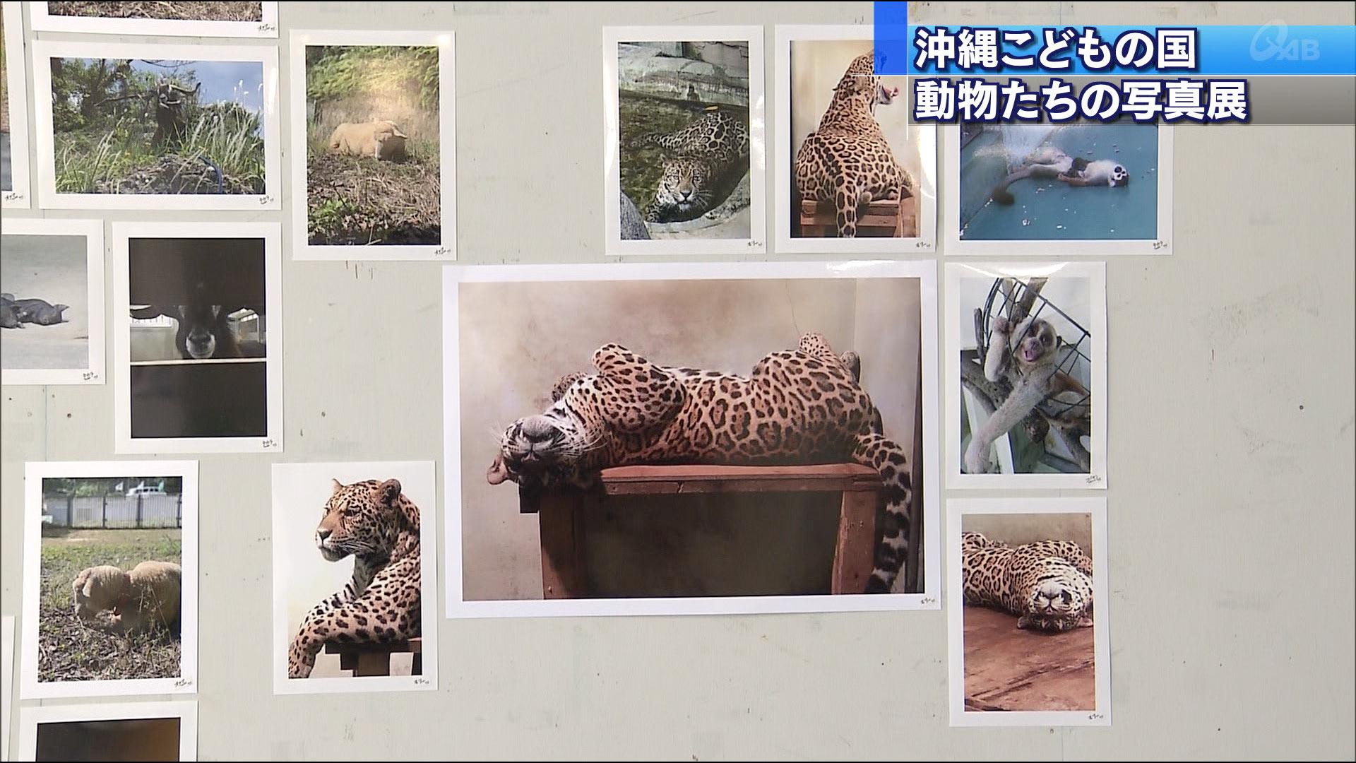 飼育員・獣医のスマホの中写真展