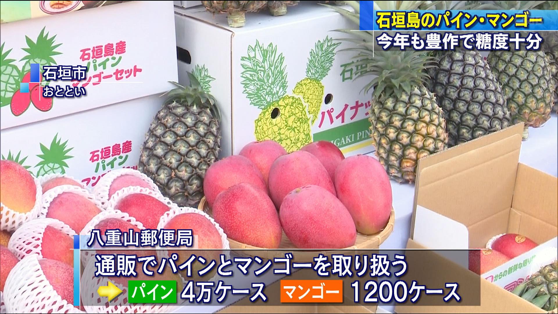 石垣島パインとマンゴー出荷式