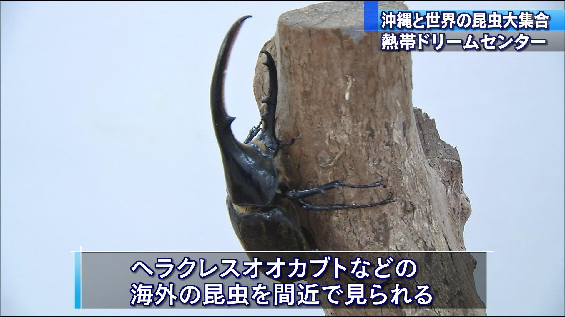 沖縄と世界の昆虫大集合