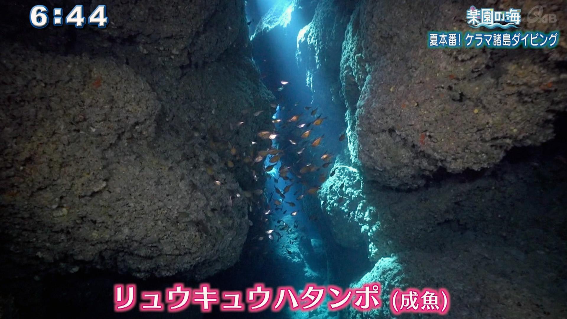 楽園の海 夏本番!ケラマ諸島ダイビング