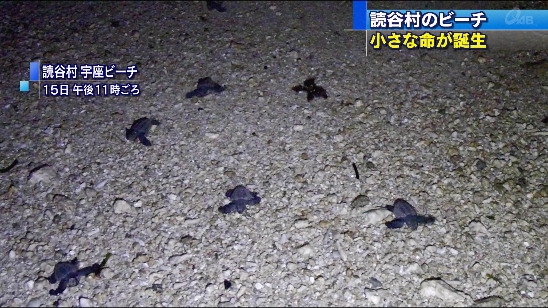 同じ夜に アオウミガメの「ふ化と産卵」を撮影