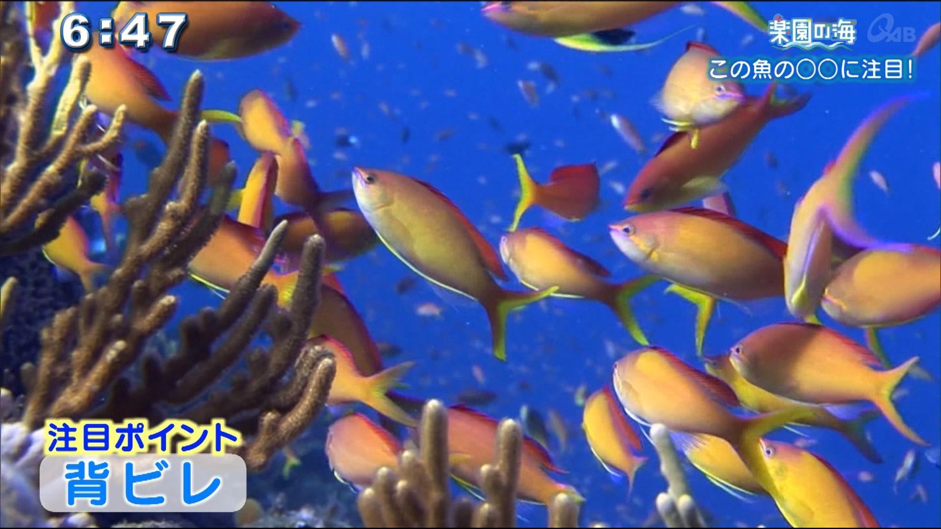 楽園の海 この魚の〇〇に注目!!
