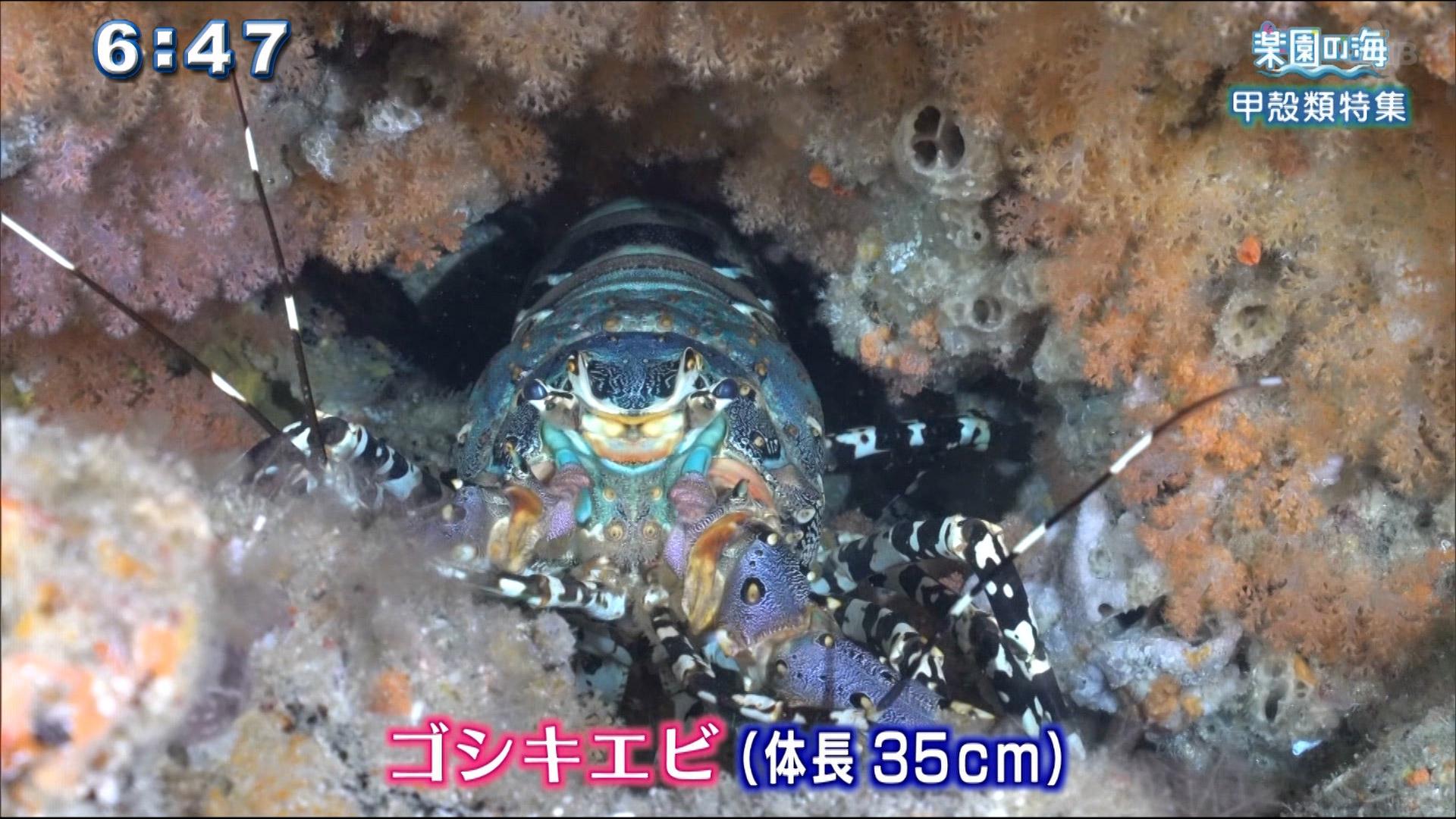 楽園の海 甲殻類特集