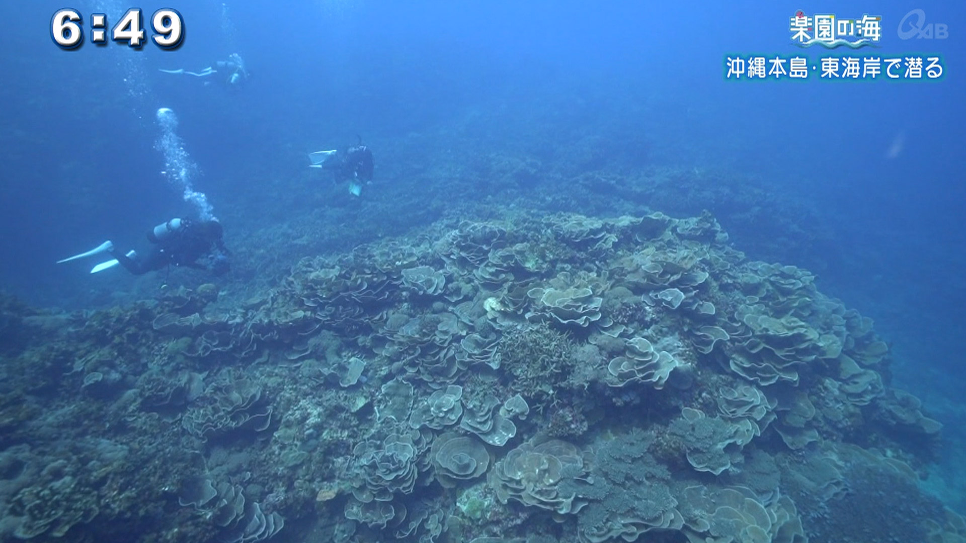 楽園の海 沖縄本島・東海岸で潜る