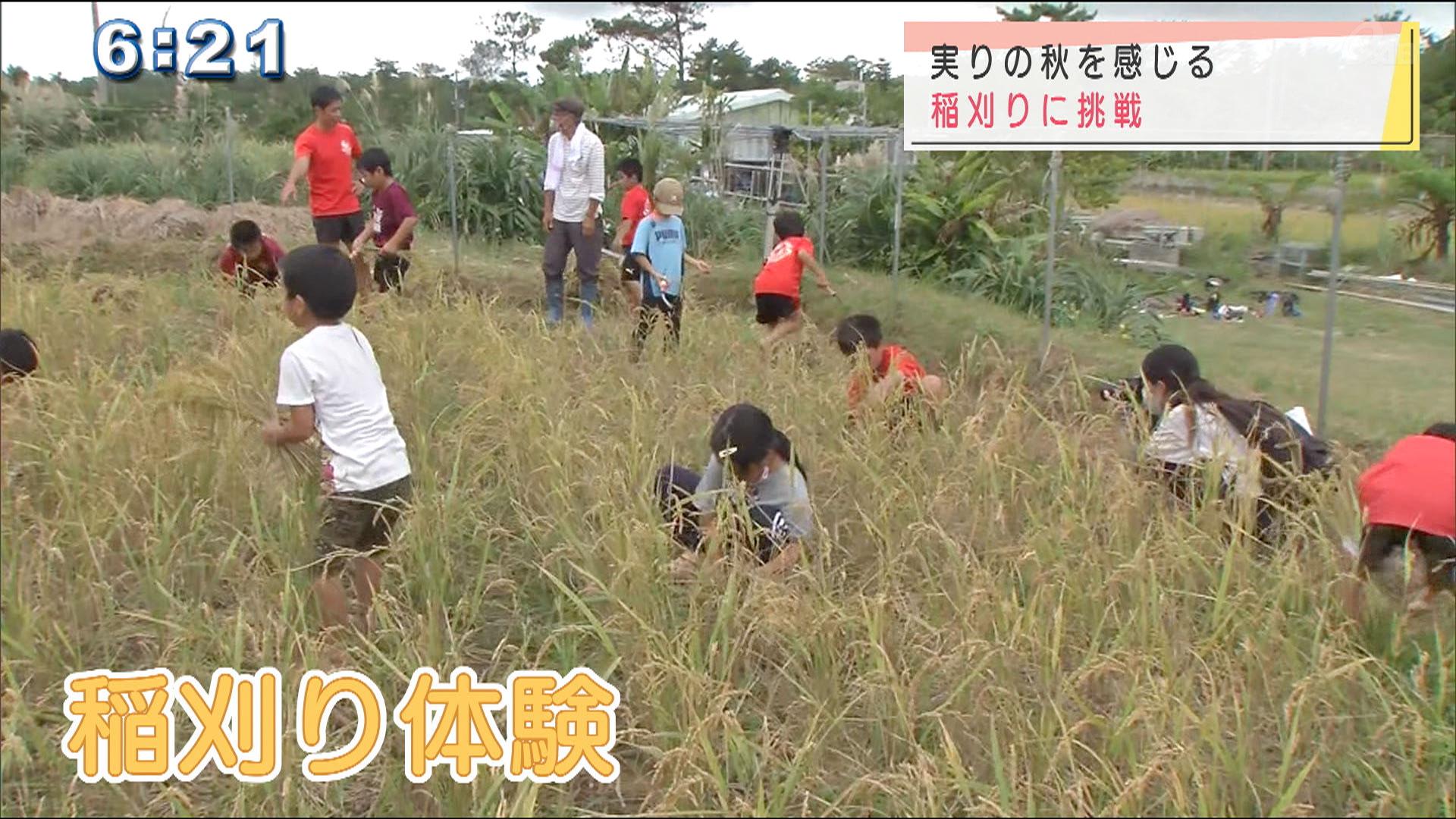 子どもたちが稲刈り体験