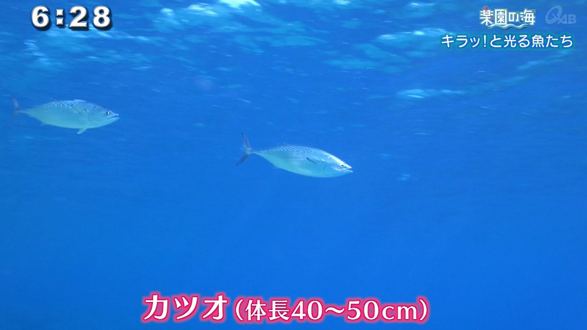 楽園の海 キラッ!と光る魚たち