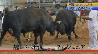 カメラマンリポート 迫力!闘牛の魅力を追う
