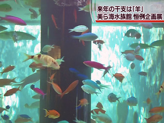 「羊」にちなんだ企画展 美ら海水族館恒例