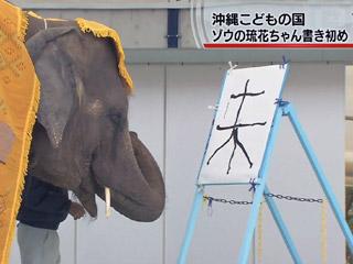 インド象の琉花ちゃんが書き初め
