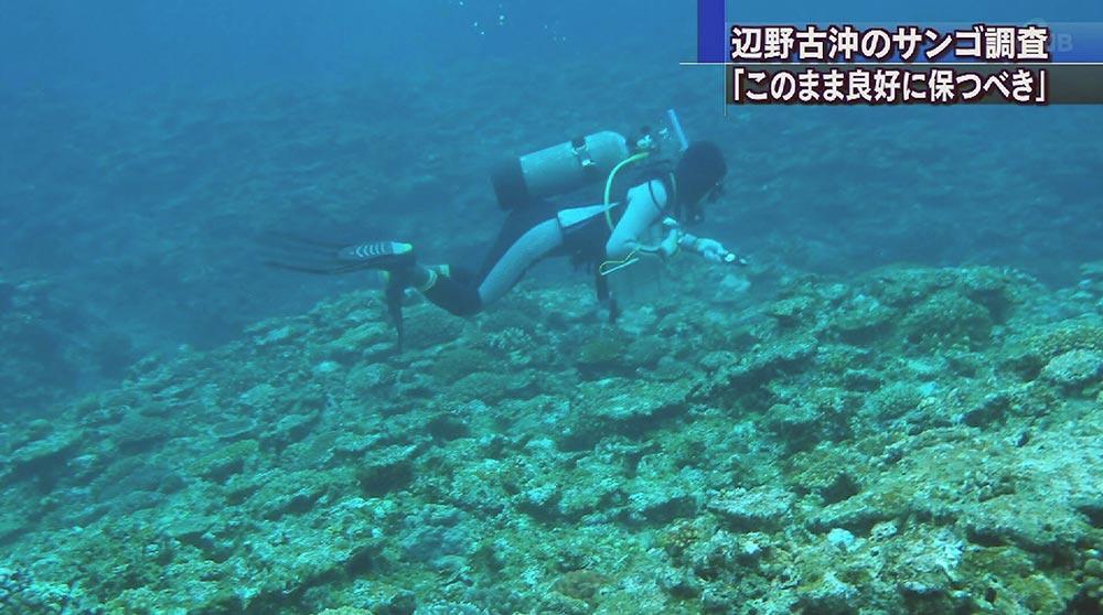 自然保護団体 辺野古沖でサンゴ調査