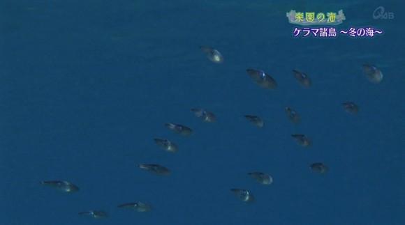 楽園の海「ケラマ諸島〜冬の海〜」