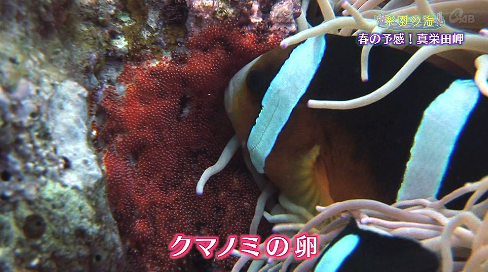 楽園の海 春の予感!真栄田岬