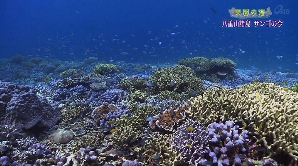 楽園の海 八重山諸島 サンゴの今