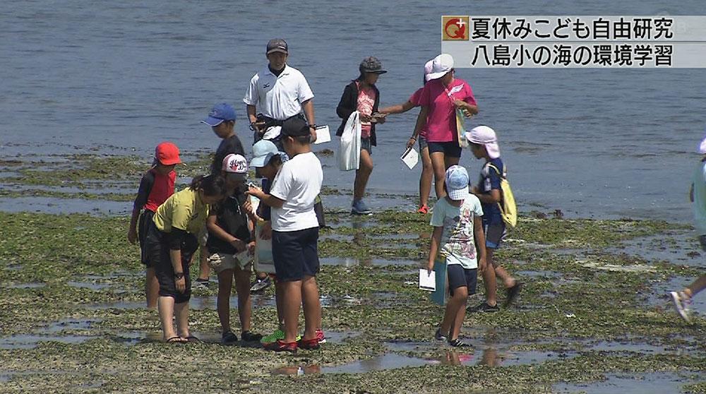 夏休みこども自由研究 石垣・八島小の海の環境学習