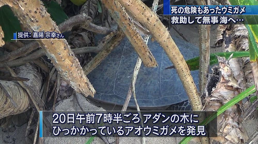 アオウミガメの画像 p1_29