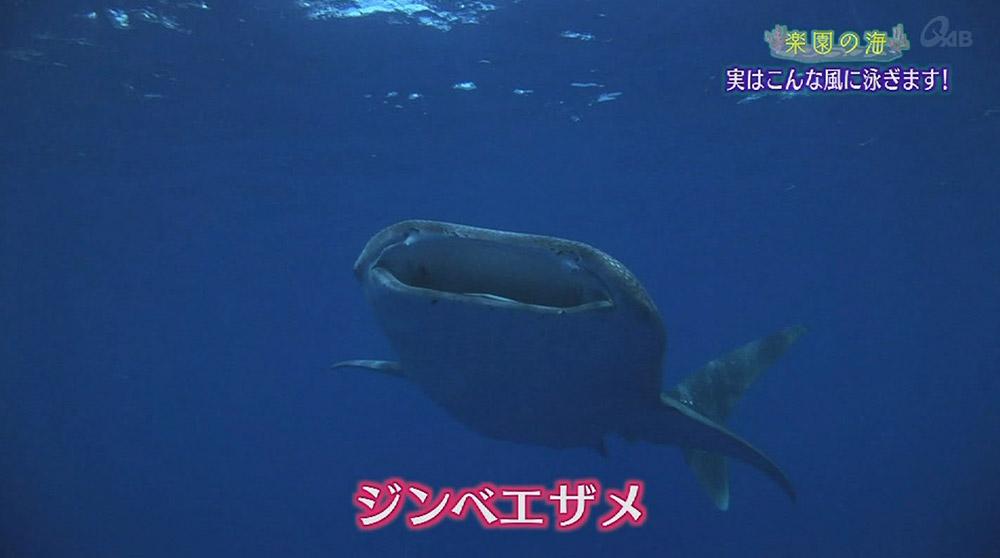 楽園の海 水中生物の泳ぎ方