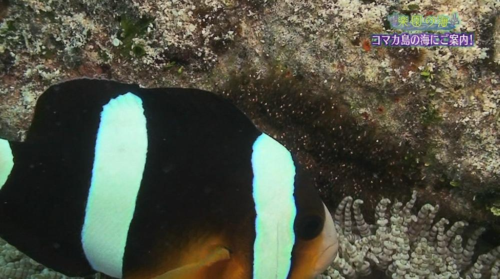 楽園の海 コマカ島を潜る