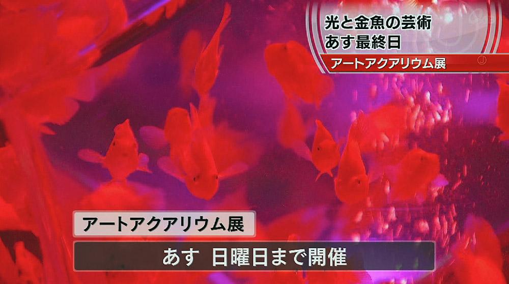 アートアクアリウム展 10万人突破!