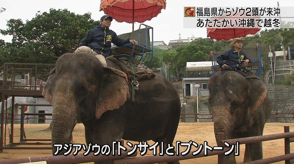 越冬で福島からゾウがこどもの国へ