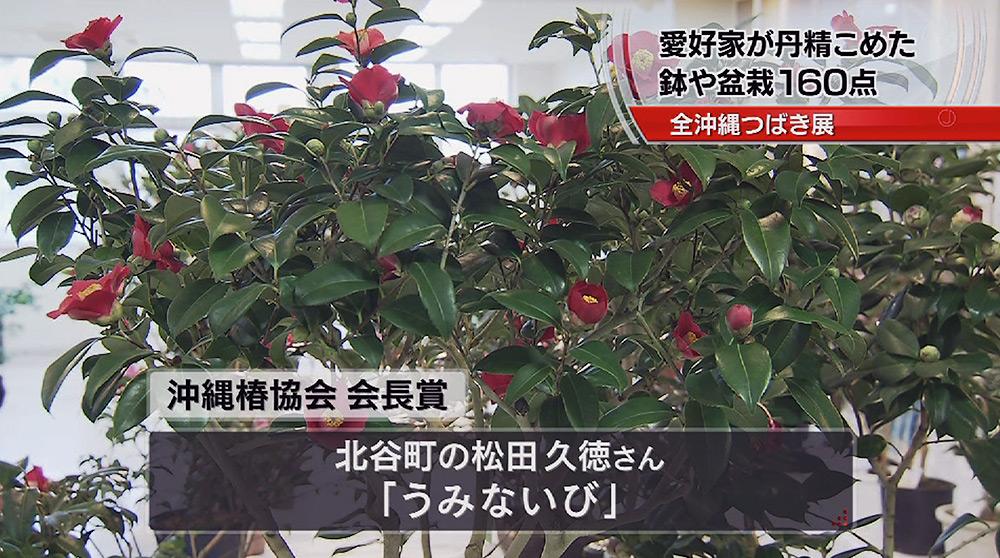 「全沖縄つばき展」始まる