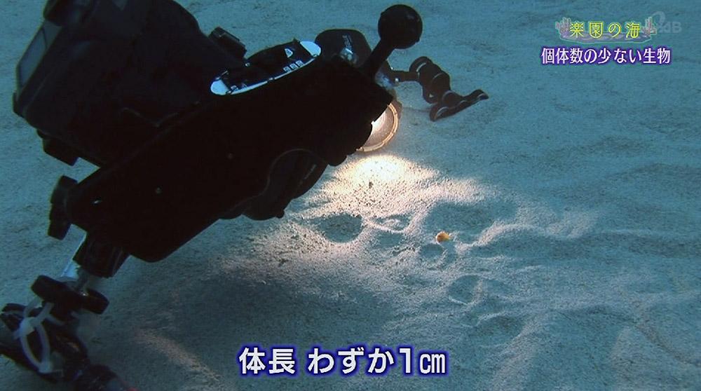 楽園の海 個体数の少ない生き物
