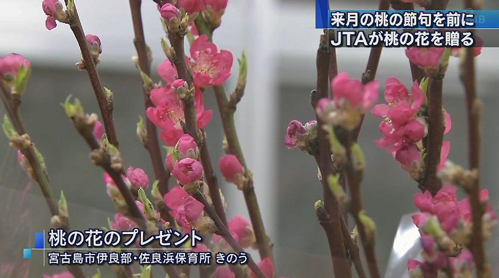 保育所などに桃の花贈る